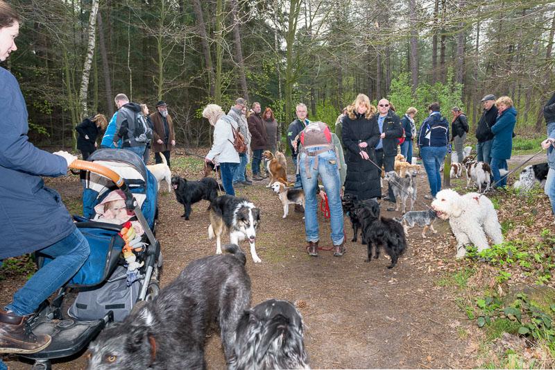 wandeling chaam met sogno hondenservices
