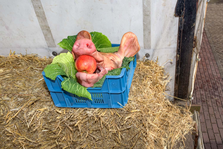 toontje met zijn varken
